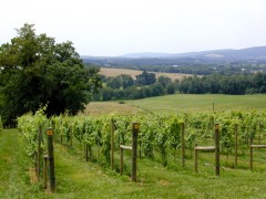 Virginia Farm Winery Stands Up to National Conservation Organization